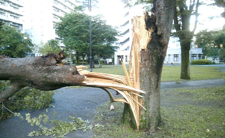自然災害対策